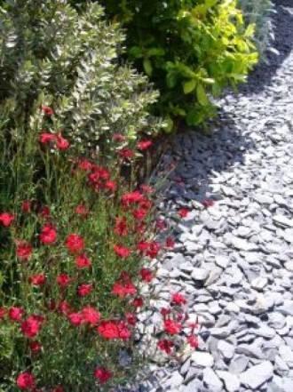 plantes jardin d'été arrosage