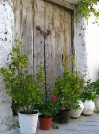 Plantes en pot arrosage Goutte-à-goutte