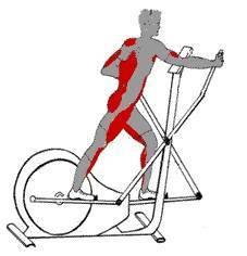 Quels muscles travaillent avec l'aqua elliptique